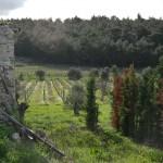 bağ montepulciano